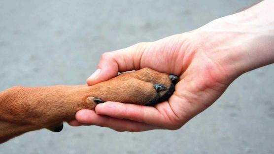 cuidados-aos-animais