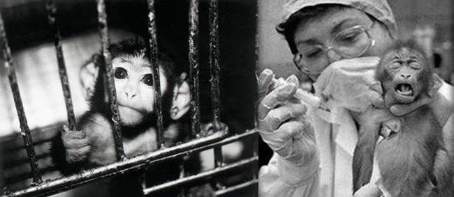 fim-dos-testes-em-animais