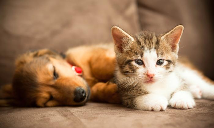 nao-ao-uso-de-animais-em-testes-de-laboratorio