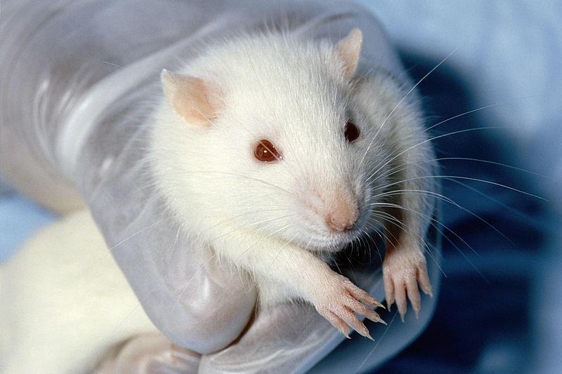 nao-aos-testes-em-animais